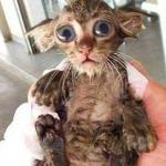 Kolekcjoner SŁODKOŚCI: kąpiel zwierzaków