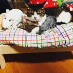Koty pokochały... łóżka dla lalek!