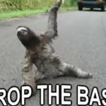 Leniwiec kocha dubstep!