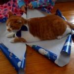 Jak spakować kota na prezent?