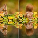 Zwierzęta KOCHAJĄ jesień!