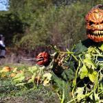 Zabójcza dynia - kolejny październikowy wkręt