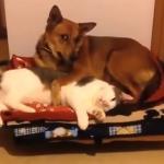 Koty KRADNĄ psie posłania!