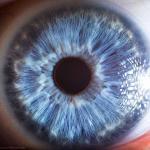 Ludzkie oko pod mikroskopem