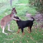 Najbardziej niesamowite zwierzęce przyjaźnie