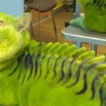 W tym salonie piękności przerabiają koty... na smoki!