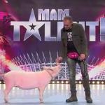 """Świnia w polskim """"Mam Talent""""!"""
