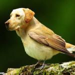 Psy o ciałach ptaków - BOSKIE!