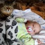 Kot kołysze dziecko do snu
