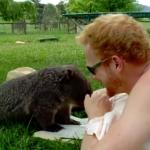 Wombat - najsłodsze zwierzątko domowe?