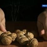 Denis Cyplenkov łupie orzechy