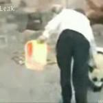 Ucieczka pandy - SKUTECZNA!