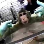 Eksperymenty na zwierzętach - czy naprawdę są konieczne?