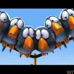 Animowana historia o wrednych ptaszkach