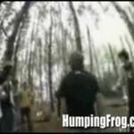 Bójka w lesie