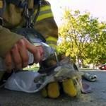 Strażak ratuje kotka - PIĘKNE!
