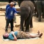 Masaż w wykonaniu słonia