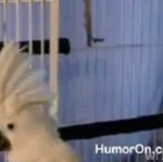 Papuga ucieka z klatki