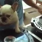 Pies, który został DJ'em