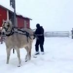 Do czego może służyć koń?