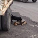 Pies próbuje ratować zmarłego przyjaciela