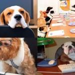 Dlaczego POWINNIŚMY zabierać psy do pracy?