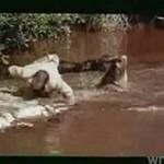 Przechytrzyć krokodyle
