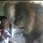 Nie zadzieraj z lwami