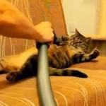 Te koty kochają ODKURZANIE!