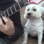 Chciał zaimponować psu swoim talentem