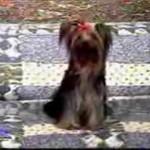 Eksplodujący pies