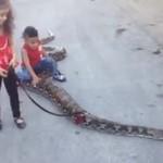 Palestyńska dziewczynka i jej brat bawią się... Z WĘŻEM!