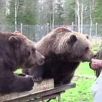 Ten mężczyzna przyjaźni się z niedźwiedziami