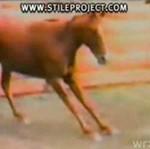 Lewy (koński) sierpowy