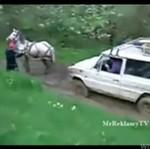 Koń - pomocny przy offroadzie