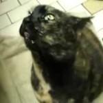 Kot - w szponach opętania
