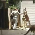 Kangur SKOPAŁ pracownicę zoo!