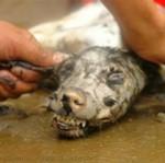 Masakra psów na Wschodzie