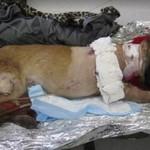 Żołnierz adoptował psa... który ocalił mu życie!