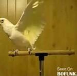 Ta papużka czuje bluesa!