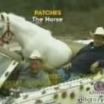 Hollywoodzki koń