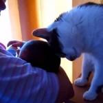 Koty poznają nowych członków rodziny