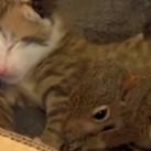 Kolekcjoner SŁODKOŚCI - koty zaadoptowały wiewiórkę!
