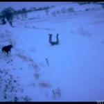 Skok NA GŁÓWKĘ w śnieg!