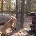Wielka przyjaźń lisa