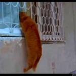 Ten kot nie jest mile widziany w domu