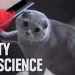 Najśmieszniejsze koty 2013