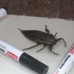 Insekt tańczy w zagrodzie