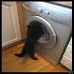 Kociak nie ogarnia pralki!