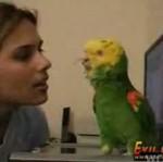 Tańcząca i śpiewająca papuga